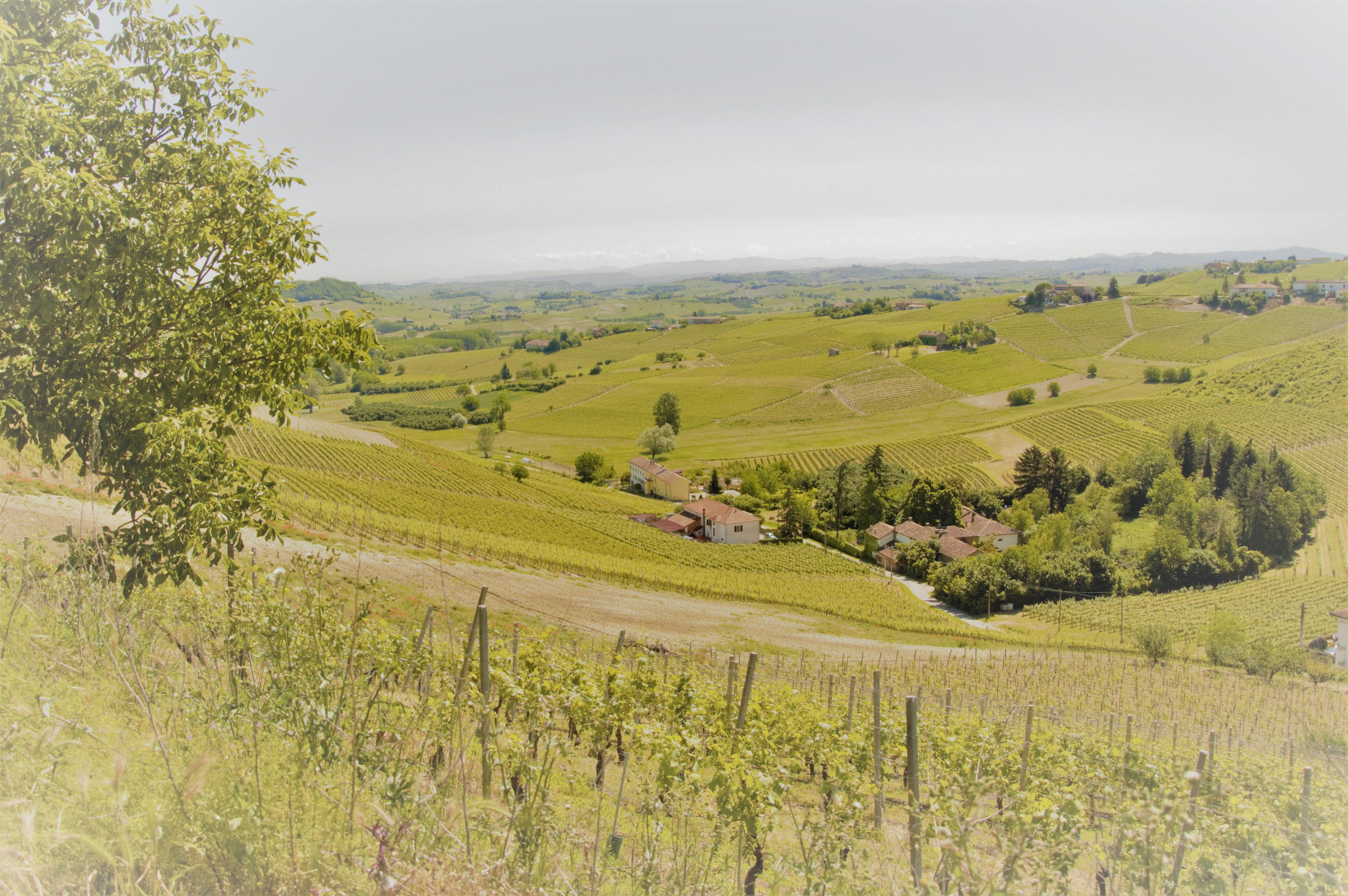 Vigna Casteburio - Azienda Agricola Baldi - Costigliole Monferrato