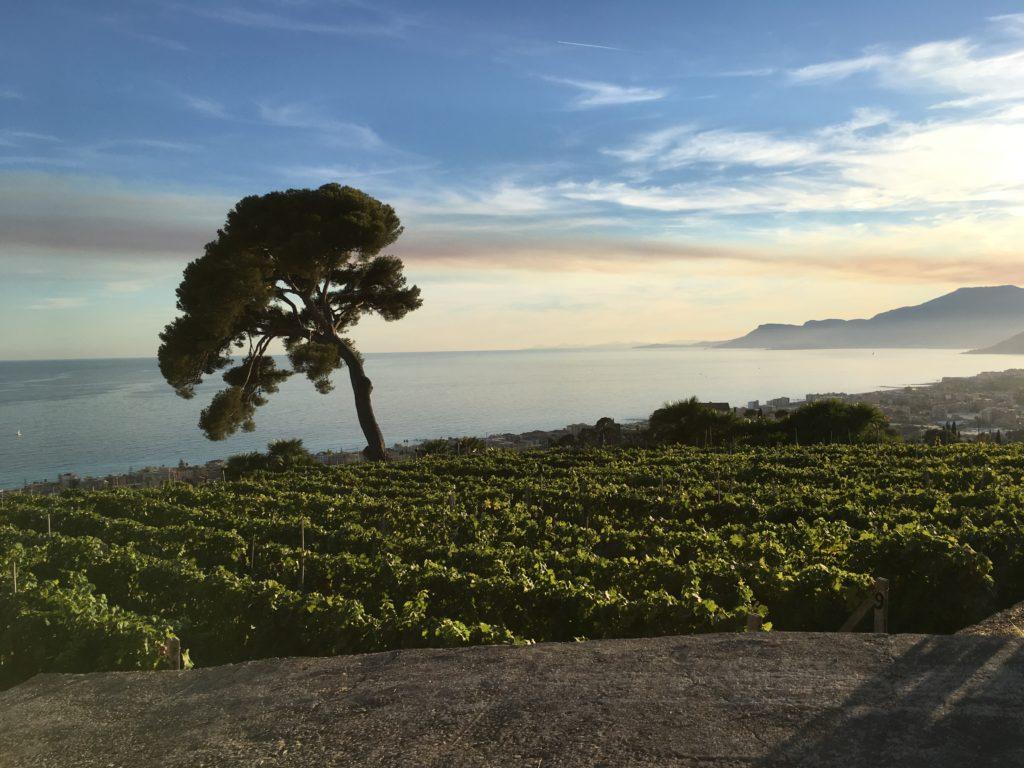 Una terrazza sul mare di Bordighera - Wonderland